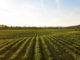 Organic Agriculture in Sustainable Technology